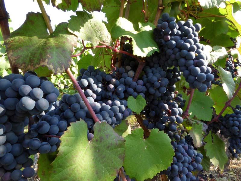 wine-939935_1920